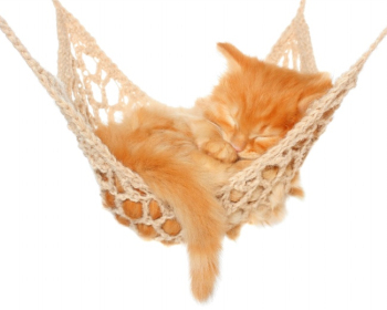 Persian cat sleeping on the hammock